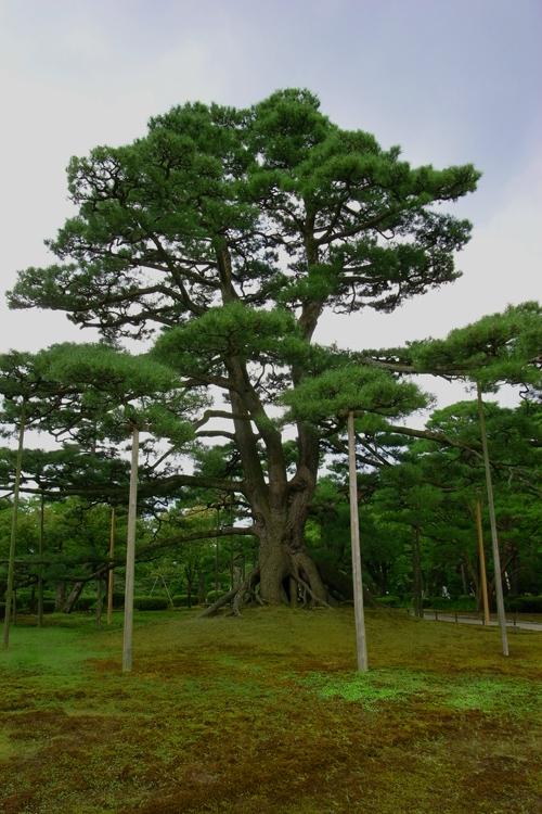 兼六園・根上松 霞ヶ池 兼六園のほぼ中心部に位置し、兼六園内で最も大きな池です。栄螺山... 日